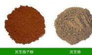 鉴别灵芝孢子粉的方法